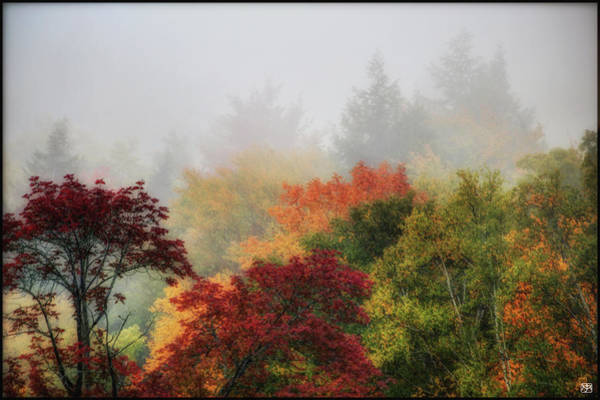 Photograph - Foliage In The Mist by John Meader