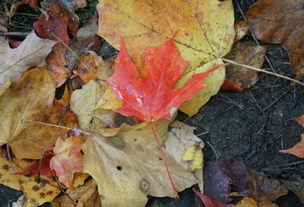 Photograph - Foliage by Nick Mares