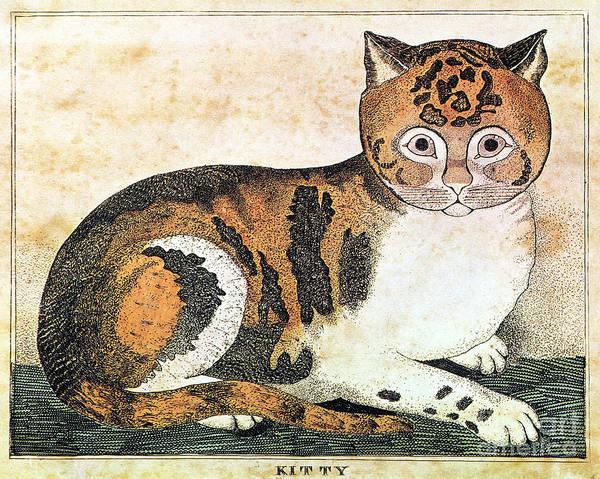 Photograph - Folk Art: Cat by Granger
