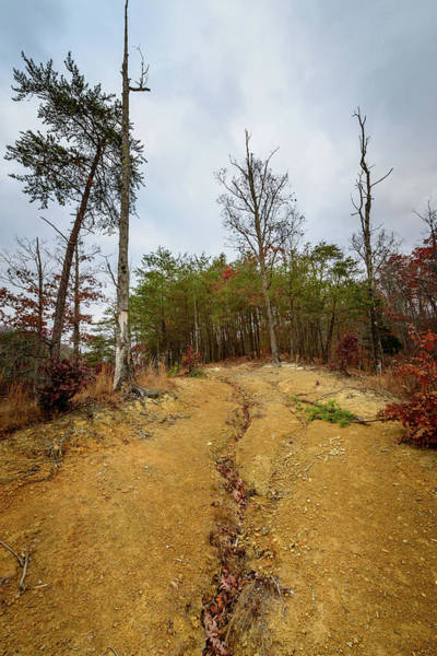 Photograph - Follow Me Home by Michael Scott