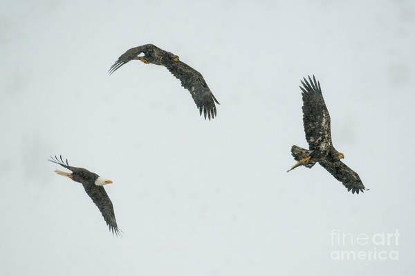 Fish Eagle Photograph - Follow That Fish by Mike Dawson