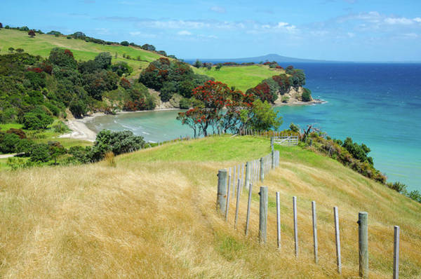Pohutukawa Photograph - Follow The Fence by Ian Rushton