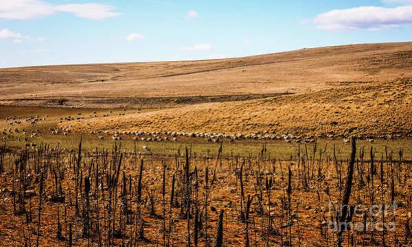 Photograph - Follow The Green Grass Path by Lexa Harpell
