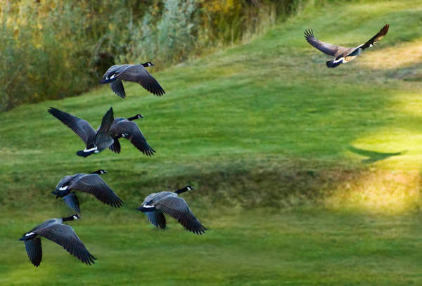 Photograph - Follow The Leader by Mick Burkey