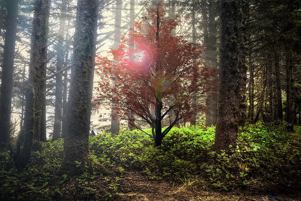 Photograph - Follow The Light In The Forest by Debra and Dave Vanderlaan