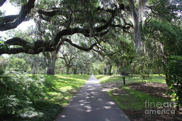 Photograph - Follow The Oak Path by Carol Groenen