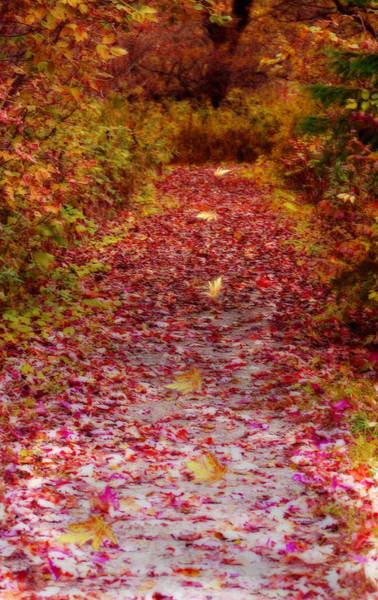 Digital Art - Follow The Path by Cathy Beharriell