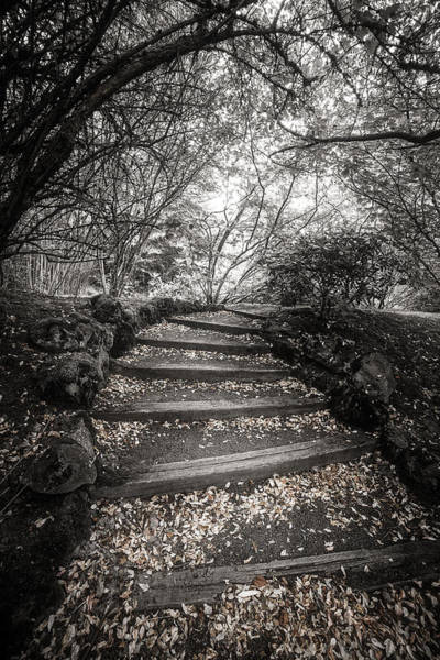 Photograph - Follow The Path by Wes and Dotty Weber