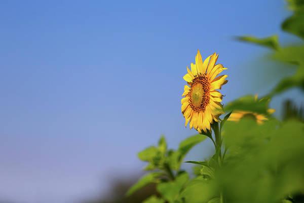 Photograph - Follow The Sun by SR Green