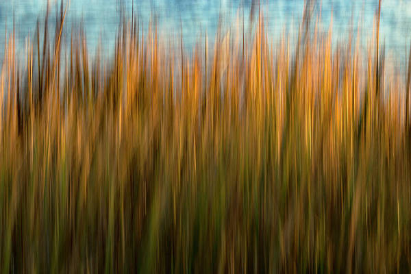 Robinson Photograph - Folly Grass by Nicole Robinson