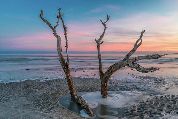 Wall Art - Photograph - Folly Sunset Tree by Drew Castelhano