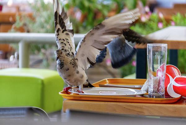 Sea Wall Art - Photograph - Food-picking Pigeon  by Iordanis Pallikaras