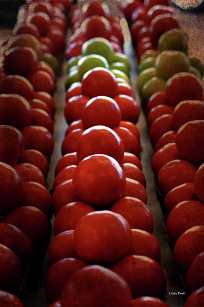 Photograph - Food Tomatoes Marching Maters by Lesa Fine