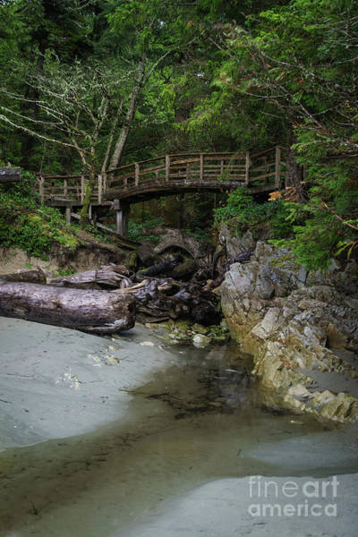 Photograph - Foot Bridge At Tofino by Carrie Cole