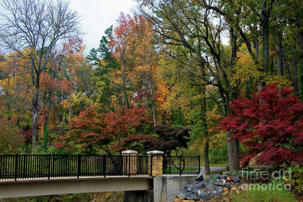Photograph - Foot Bridge In The Fall by Jill Lang