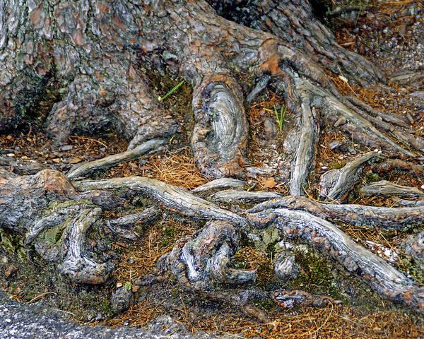 Photograph - Foot Of The Tree by Lynda Lehmann