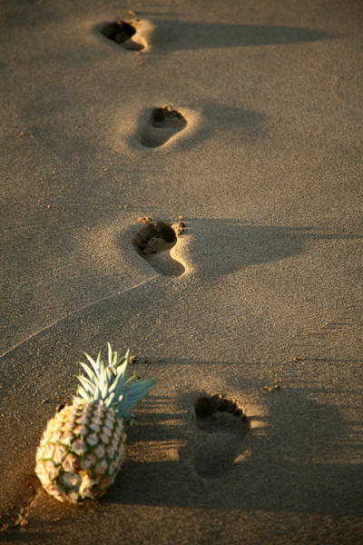 Wall Art - Photograph - Foot Prints In The Sands Of Time by Michael Ledray