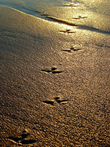 Photograph - Footprints - Bird by Jill Reger