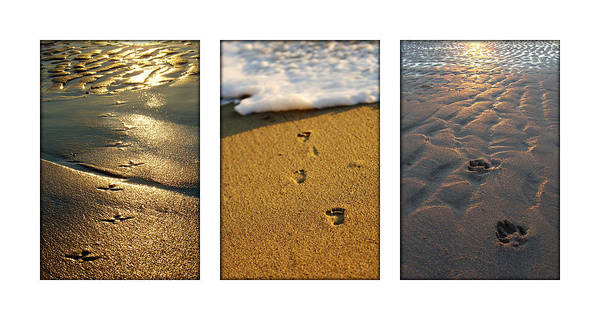 Photograph - Footprints In The Sand by Jill Reger