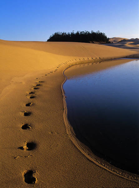 Photograph - Footprints In The Sand by Robert Potts