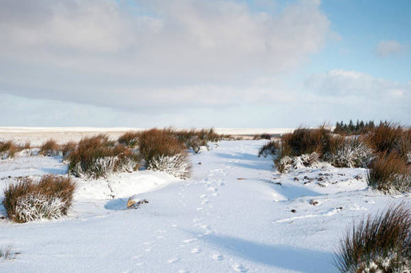 Photograph - Footprints In The Snow Iv by Helen Northcott