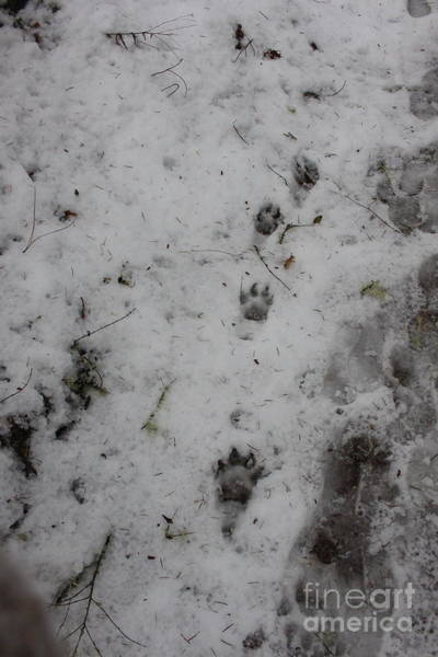 Photograph - Footprints In The Snow by Marie Neder