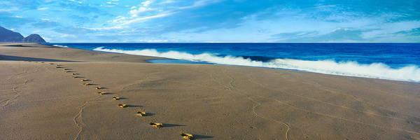 Baja California Peninsula Wall Art - Photograph - Footprints On The Beach, Playa La by Panoramic Images