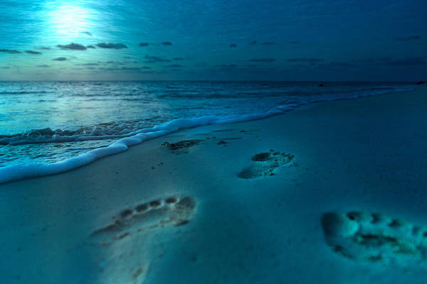 Comtemporary Photograph - Footprints To Paradise by Betsy Knapp