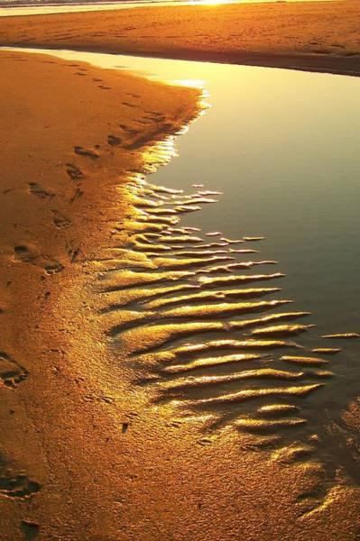 Photograph - Footprints by Trish Tritz