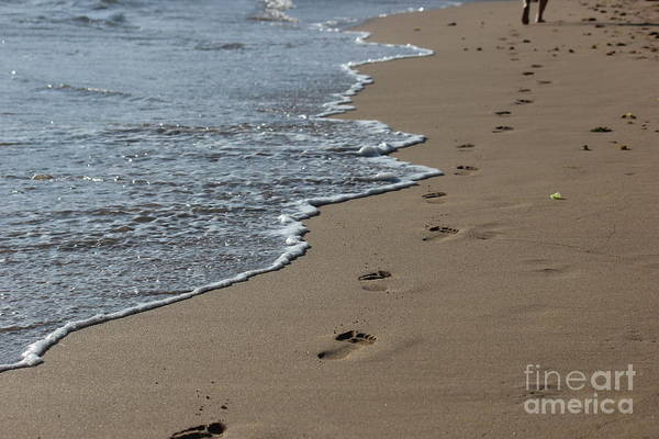 Photograph - Footsteps by Wilko Van de Kamp