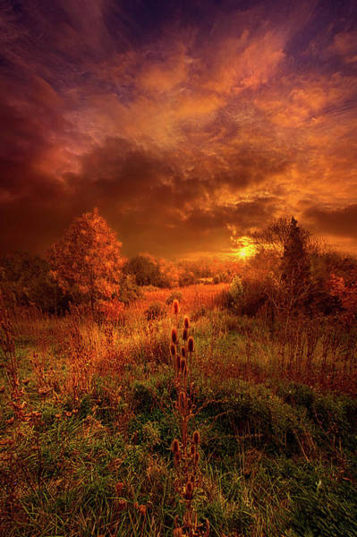 Earth Tones Photograph - For A Time I Rest In The Grace Of The World And Am Free by Phil Koch