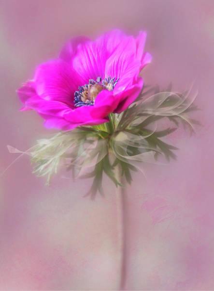 Photograph - For My Valentine. by Usha Peddamatham