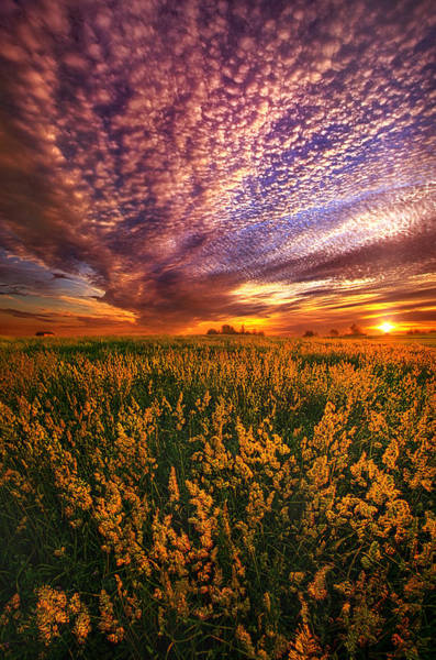 Photograph - For Some A Way To Feel by Phil Koch