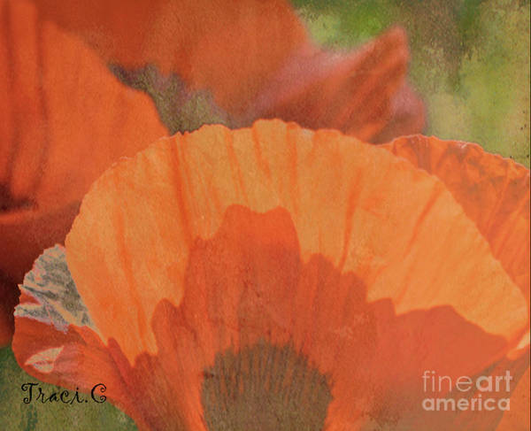 Photograph - For The Love Of Poppy by Traci Cottingham