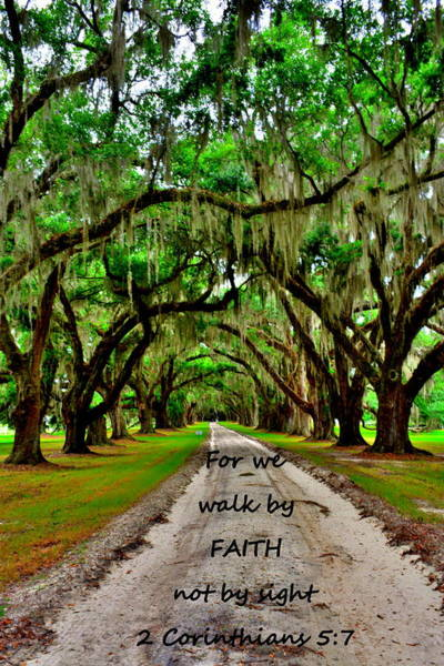 Photograph - For We Walk By Faith Not By Sight 2 Corinthians 5 7 Majestic Oaks Pathway by Lisa Wooten