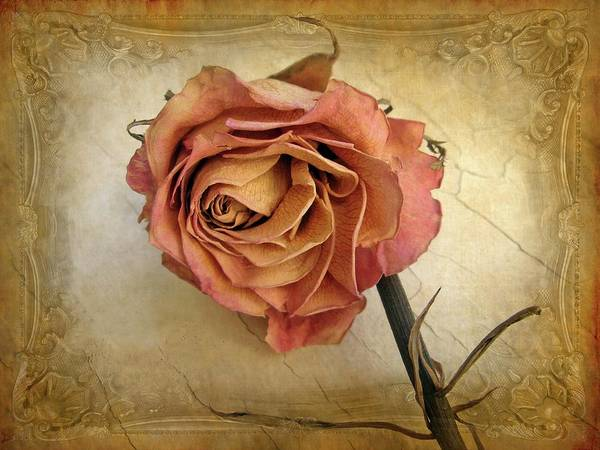 Pink Rose Photograph - For You by Jessica Jenney