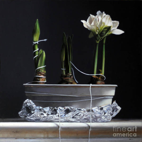 Wall Art - Painting - Forcing Amaryllis by Lawrence Preston