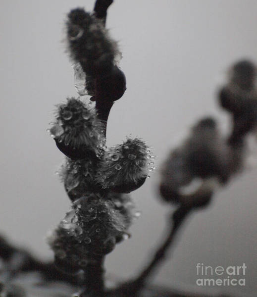 Photograph - Foreign Droplets by Vivian Martin