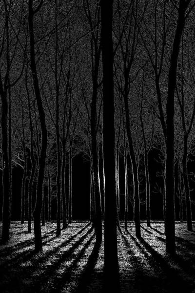 Photograph - Forest Abstract by Michael Arend