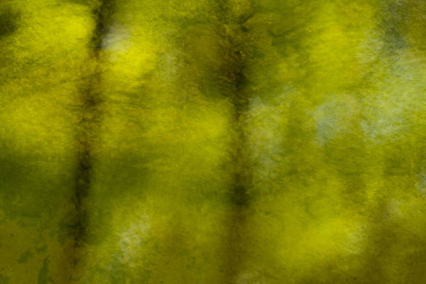 Photograph - Forest Abstract Reflection by Denise Bush