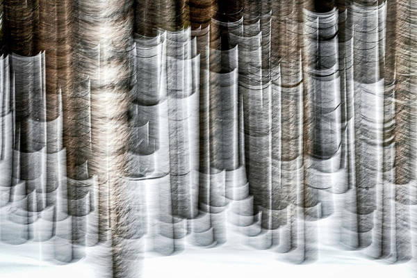 Photograph - Forest Abstract - Yellowstone by Stuart Litoff