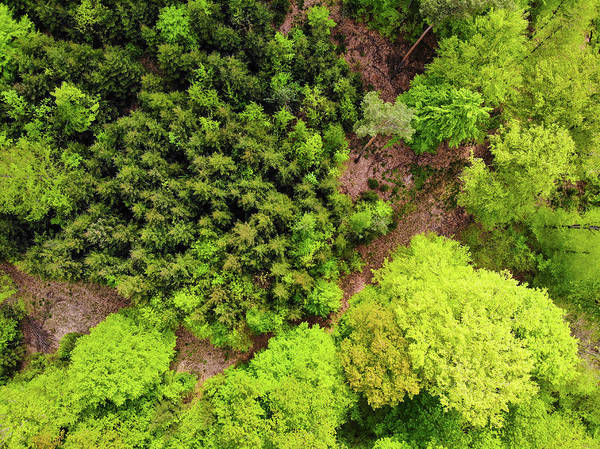 Photograph - Forest Aerial View Shades Of Green by Matthias Hauser
