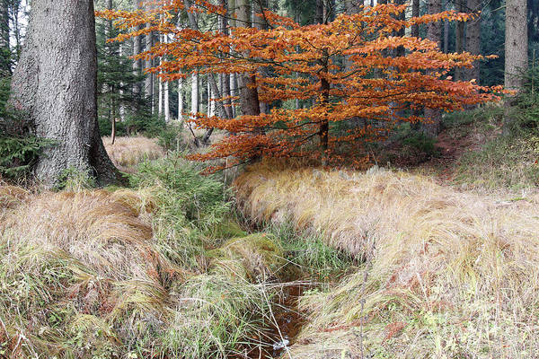 Woodland Wall Art - Photograph - Forest Autumn Still Life With The Streamlet by Michal Boubin