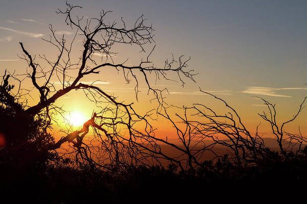 Photograph - Forest Branches In The Sunset Light by James BO Insogna