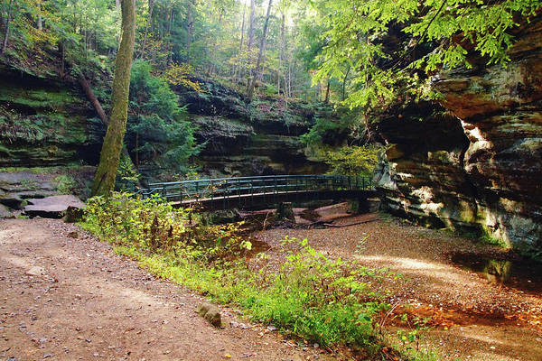 Photograph - Forest Bridge by Murdock's Gallery