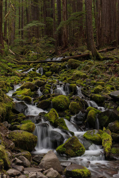 Olympics Photograph - Forest Cathederal by Mike Reid