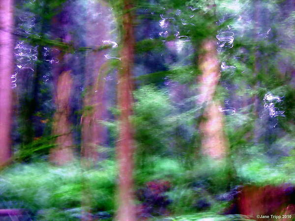 Wall Art - Photograph - Forest Conservatory  by Jane Tripp