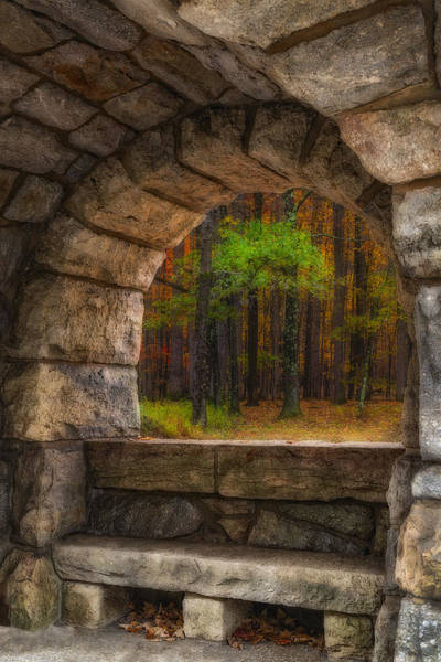Photograph - Forest Contemplation Invite by Susan Candelario