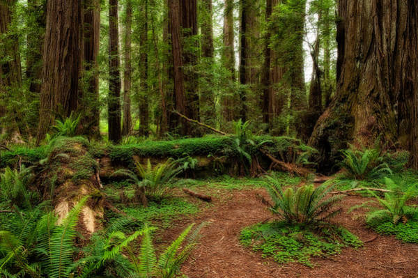 Redwood City Wall Art - Photograph - Forest Court by George Buxbaum
