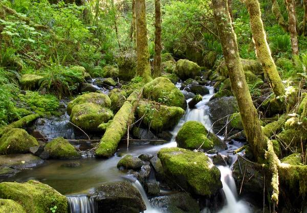 Photograph - Forest Creek by Brian Eberly